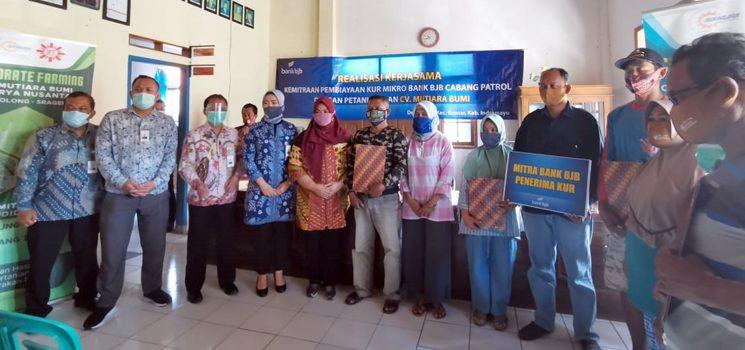 Penetrasi PEN bank bjb Salurkan KUR kepada Petani di Indramayu 1