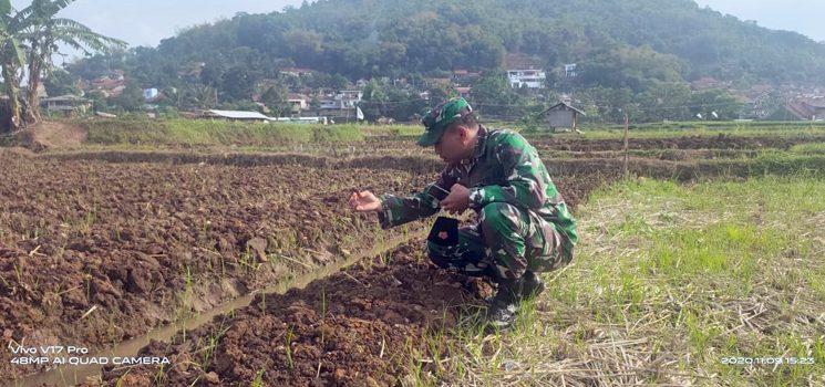 Tingkatkan Minat Petani Ratusan Tumbak Lahan Kodim 0610 Sumedang Ditanami Bawang Merah