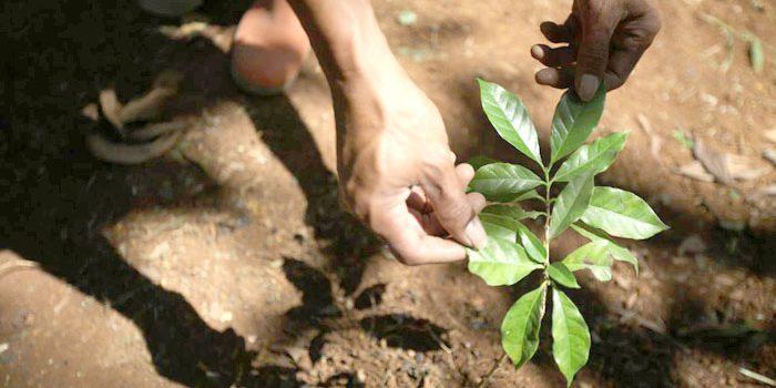 Hari Bumi Pemkot Bandung Tanam 3000 Pohon Kopi